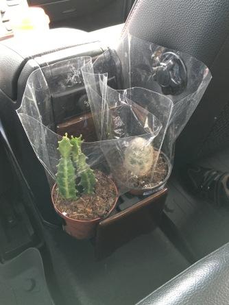 My cactus (left) in 2015