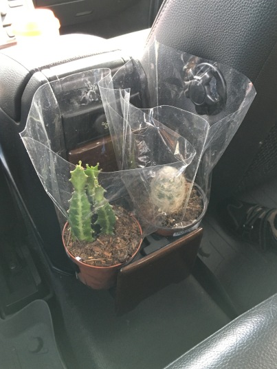 My cactus (left) in 2015